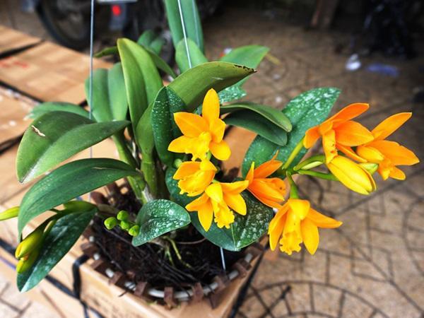 Ảnh hoa lan đẹp được nhiều người yêu thích