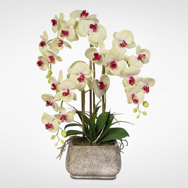 Mách nhỏ cách chọn màu hoa lan hồ điệp tặng theo phong thủy Chau-hoa-lan-ho-diep-tang-sep-sang-trong-19-06(1)