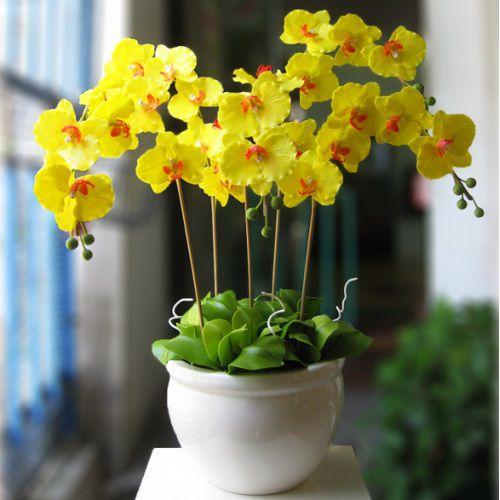 Hình ảnh hoa lan hồ điệp vàng nở rộ