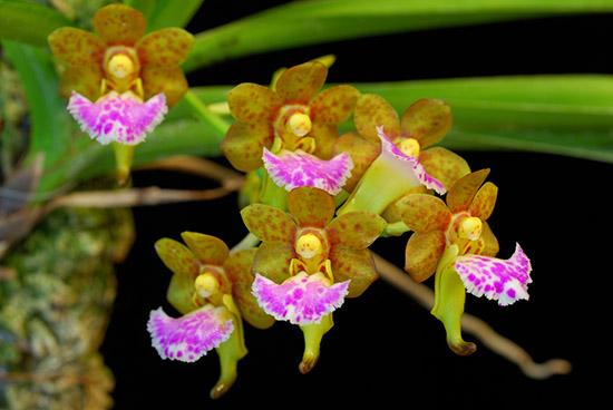 Hình ảnh hoa lan đẹp, độc đáo