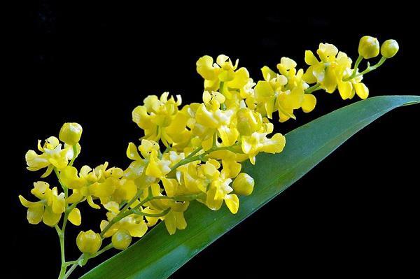 Hình ảnh hoa lan mỹ miều, mỏng manh