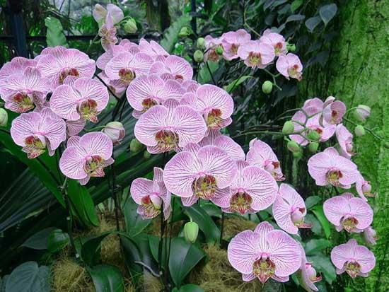 Độ ẩm cũng là yếu tố cần chú ý khi chăm sóc hoa lan hồ điệp