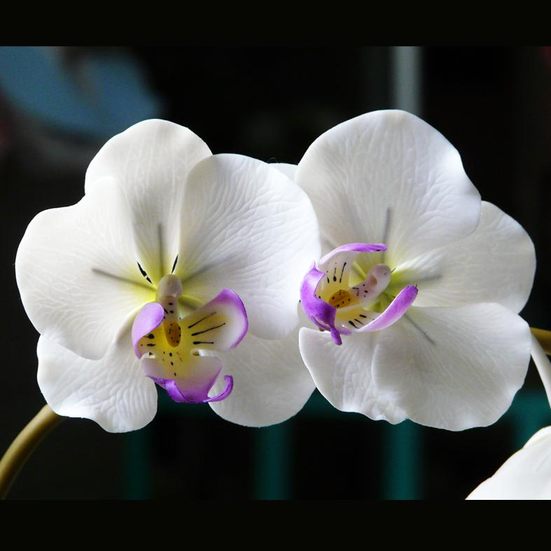 Chau-Hoa-Tan-Tai-FlowerBi-dep
