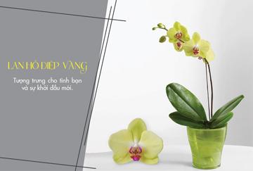 Hoa lan ho diep vang