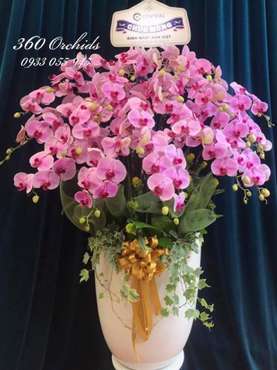 Chậu hoa lan hồ điệp hồng - Điều bí mật