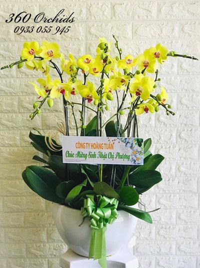 Chậu hoa lan hồ điệp vàng - Cành vàng lá ngọc