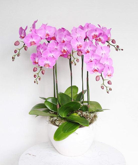Chậu hoa lan hồ điệp tím mộng mơ được trưng bày bán tại hoa tươi 360