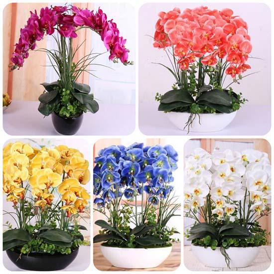 Những màu sắc đa dạng của hoa lan hồ điệp kết hợp