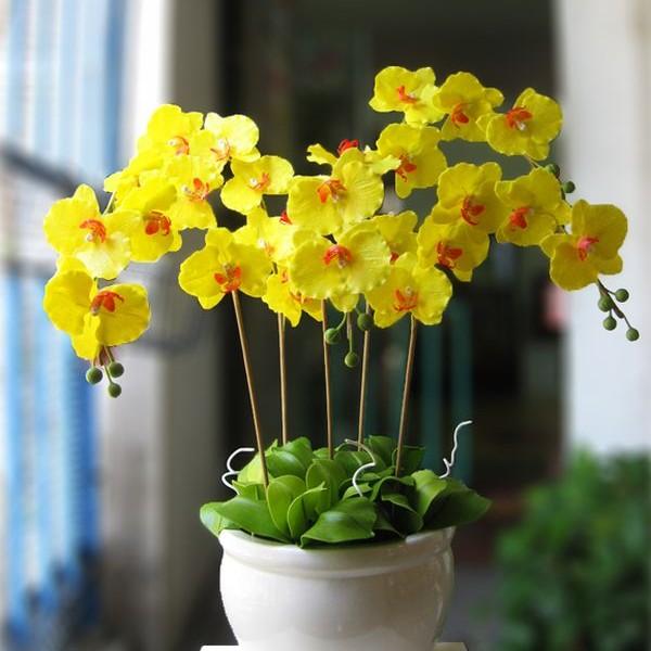 cách cắm hoa lan hồ điệp vàng