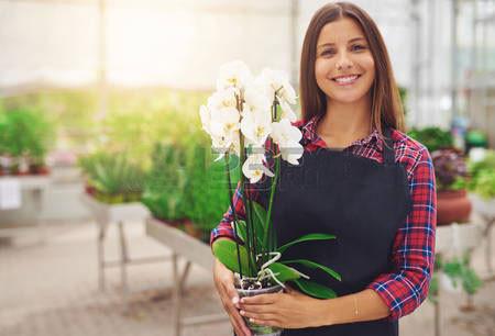 Địa chỉ tin cậy đặt mua mẫu hoa hồ điệp đẹp nhất
