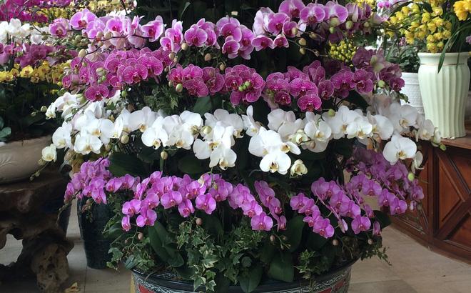 cách cắm hoa lan hồ điệp vạn hoa