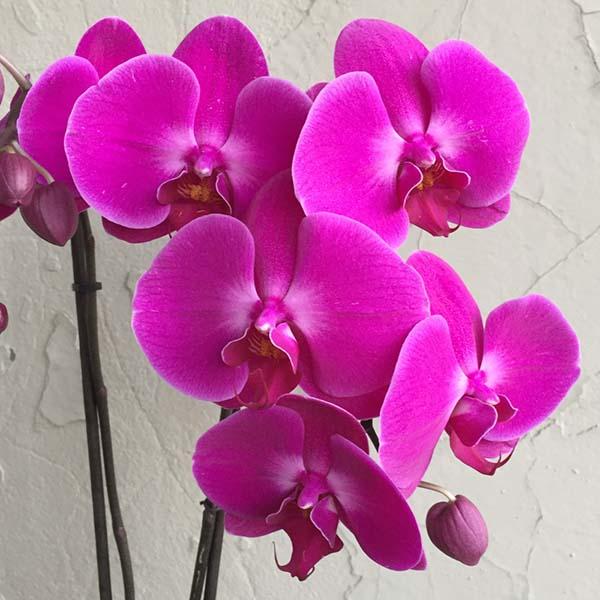 chau-lan-dang-yeu-flowerbi-dep